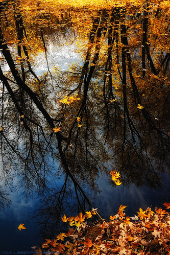 sunset tree water forest reflections river landscape virginia nikon fallcolor fallcolors loudouncounty tomlussier