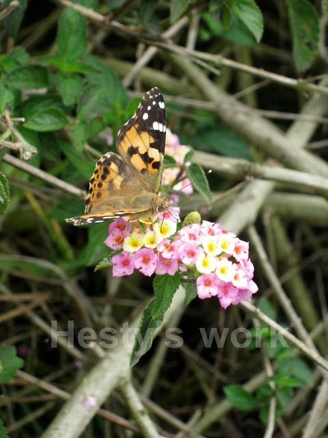 kupu2 dan bunga