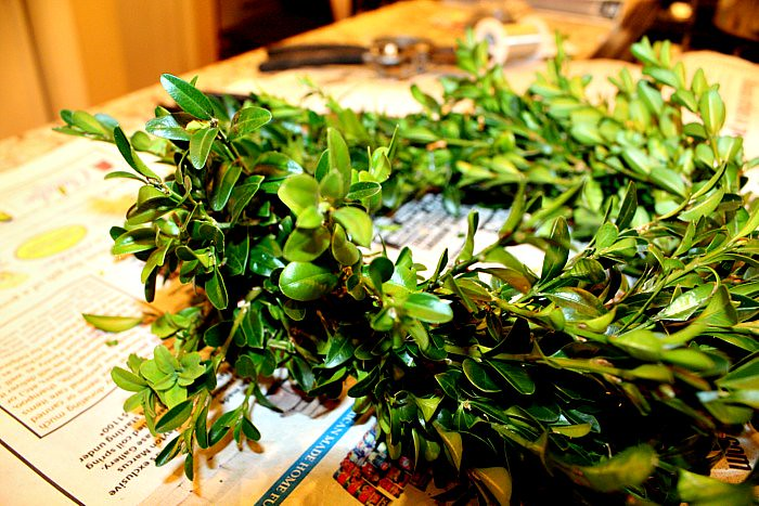 Boxwood Wreath 012