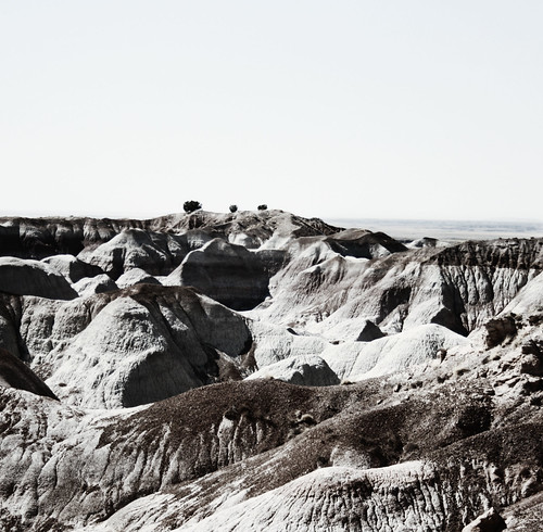 2008, Trees at Painted Desert/Petrified Forest, Arizona by Juli Kearns (Idyllopus)