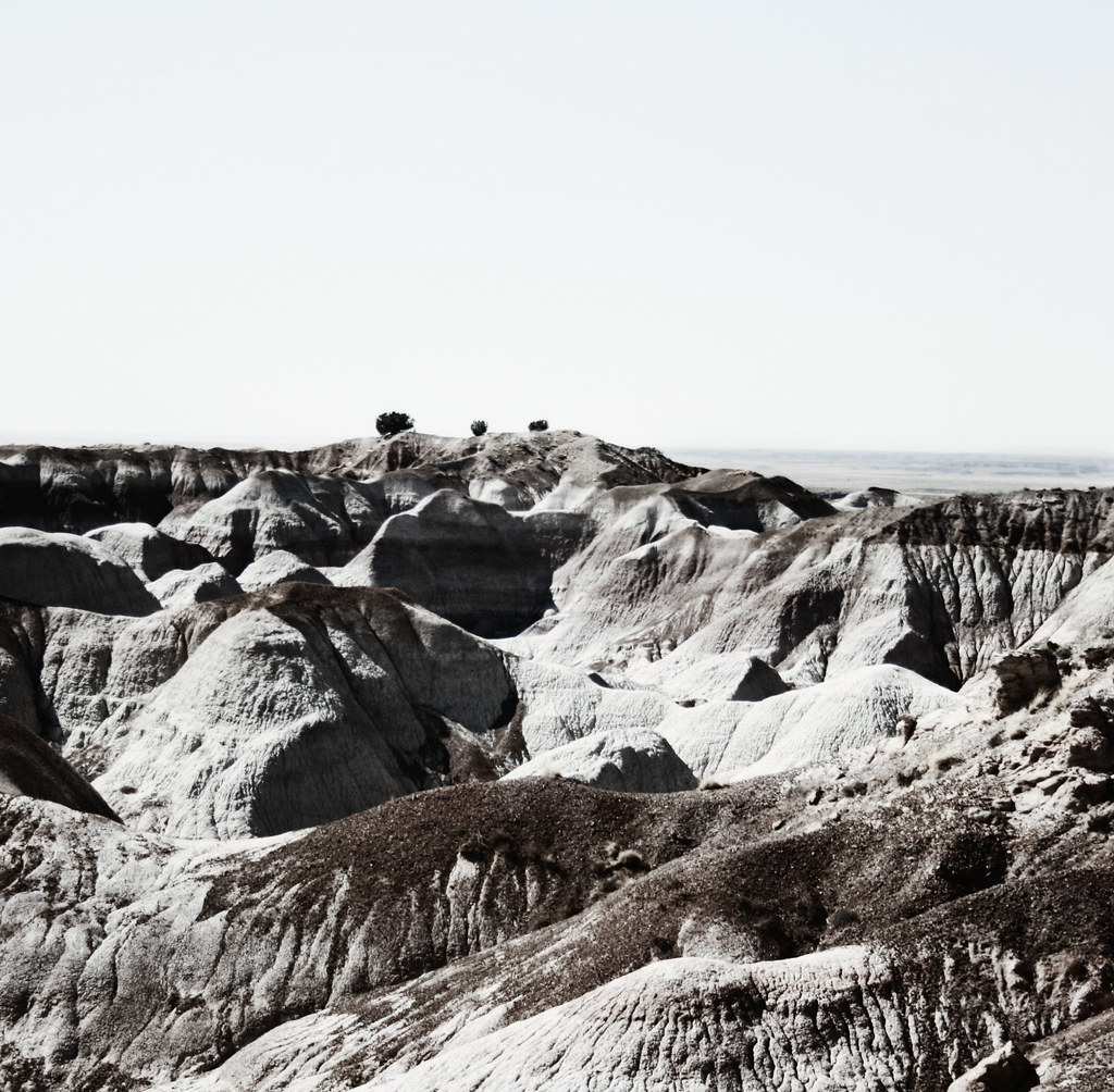2008, Trees at Painted Desert/Petrified Forest, Arizona