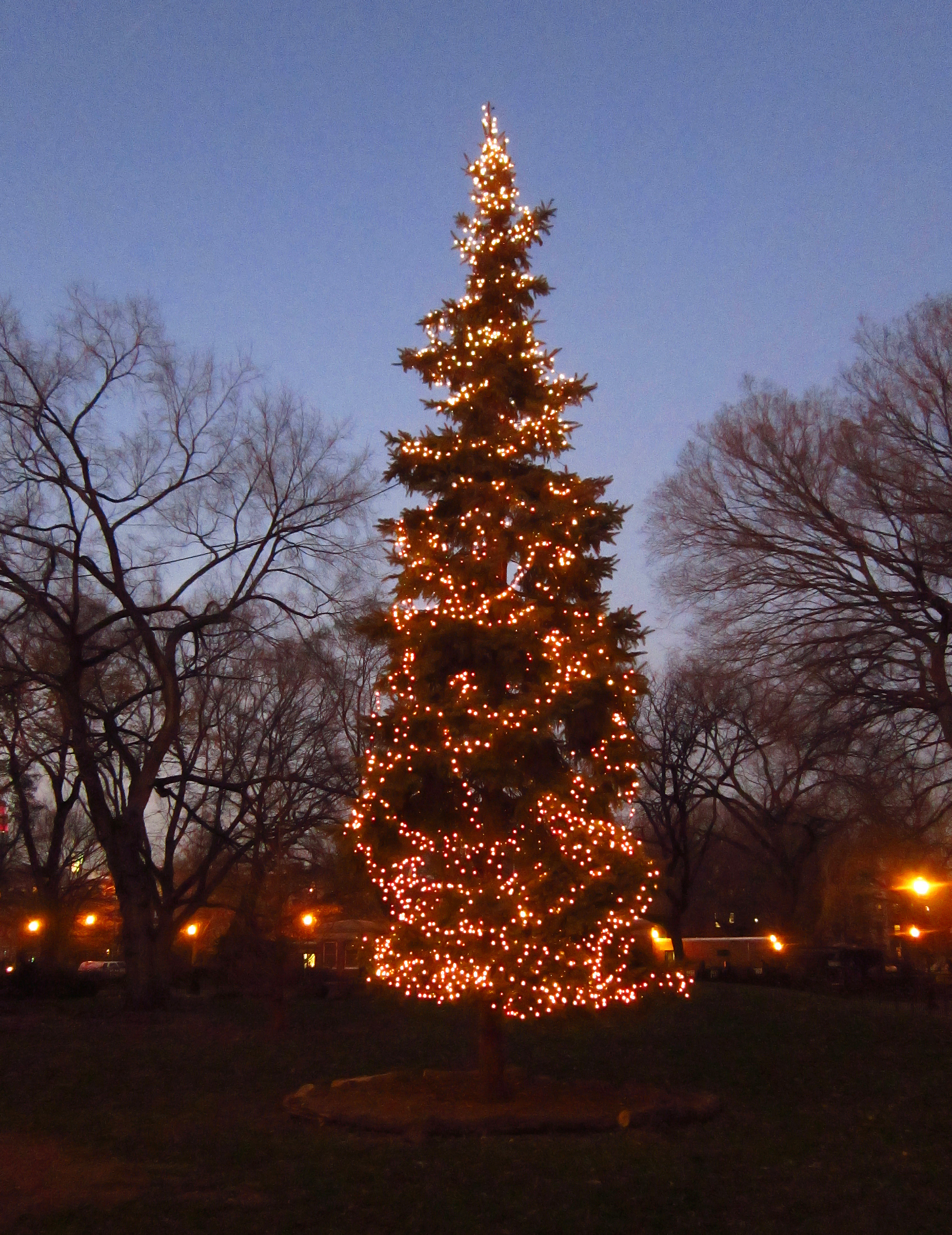 Tompkins Square tree lighting