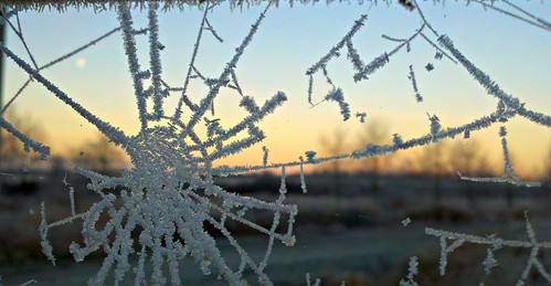12-12-11 Hoar Frost and Spider Web by roswellsgirl