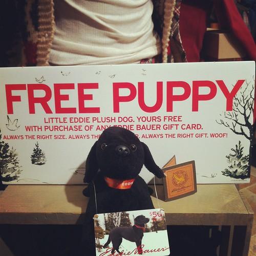 FREE PUPPY?!