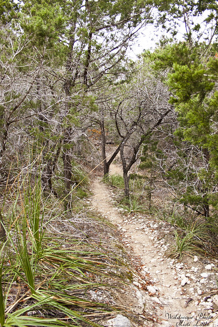 hill country state natural area_12 10 11_0207