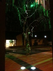 The Tree of Knowledge at night, Barcaldine