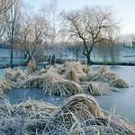 Windlesham-Arboretum-Winter-6x7