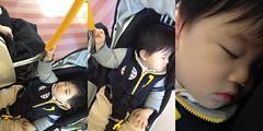 電車で寝るとらちゃん(2011/12/31)