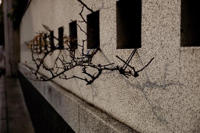 外壁の枝先