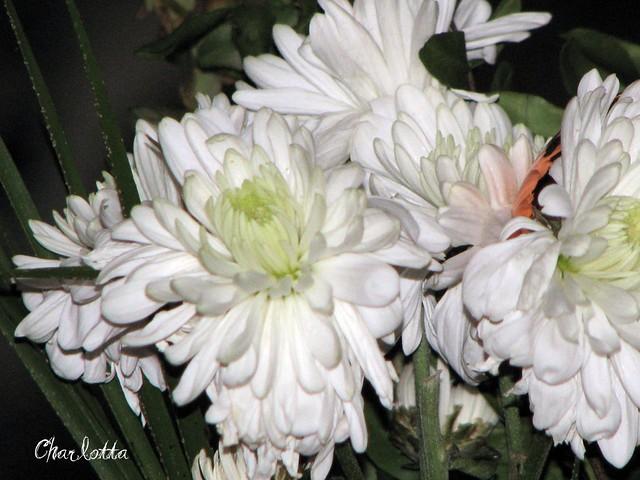 DNU blommor