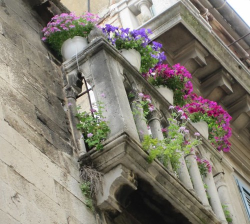 Flowers in the ruins by amnellanna
