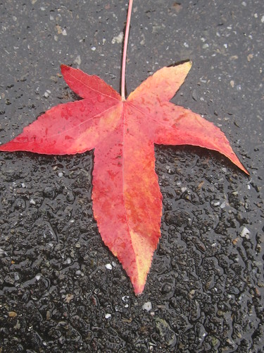 Red Leaf on the Wet Ground