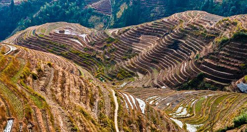 Rice terraces II
