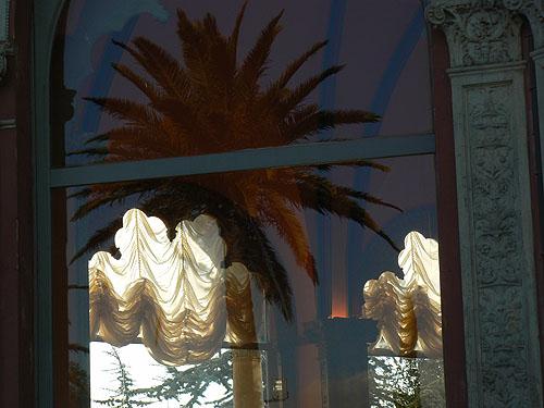 ephrussi reflet palmier.jpg