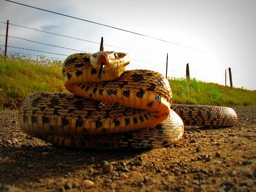 6676310791 6ffb1ee70f Upset Snake