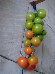 tomate de ramellet