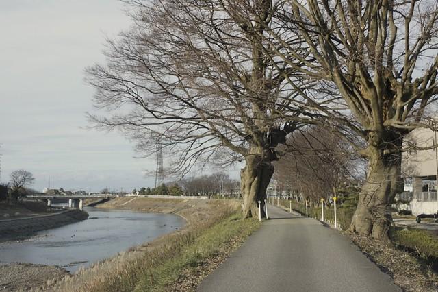 浅野川下流域