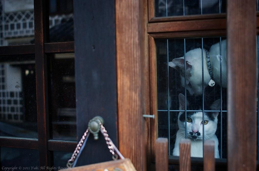 Cats@Okayama