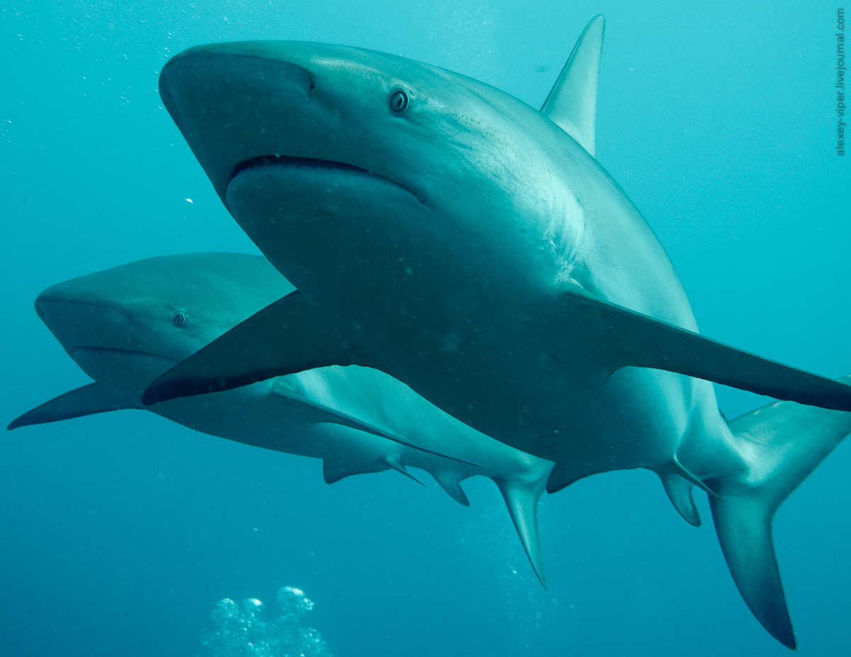 2012.01.12-2012.01.26_dive_safari_[cuba]-diving-005