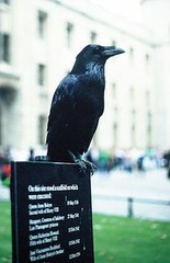 Corvus[1]