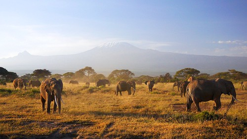 africa park morning light kilimanjaro lens landscape tanzania lumix day kenya panasonic safari clear mount national pancake mm 20 polarized elefant kenia ya słoń poranek amboseli elefants kibo góra gf1 krajobraz narodowy kilimandżaro afryka słonie jamhuri dmcgf1