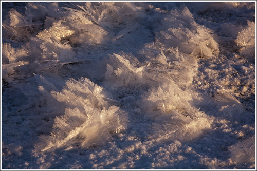 20120131. Frost. 2365. by Tiina Gill