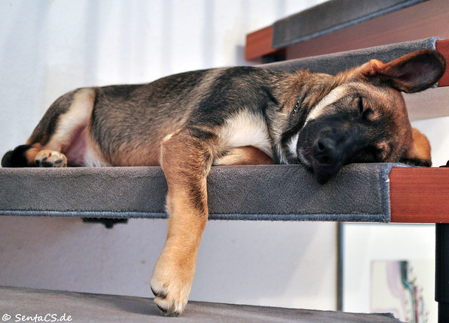 Mailo sleeping on the stairs