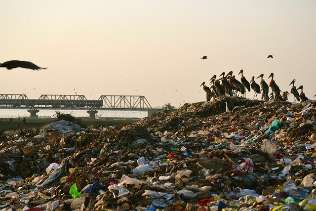 Fishing is now illegal at the beel. Dumping of the city's waste is freely allowed. Guwahati generates about 450 tonnes of waste everyday that finds its way to the periphery of the beel. The birds now seem to prefer the dump and why not- there is enough to eat!