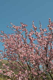 Spring Is Springing [Barcis - 30 March 2014]