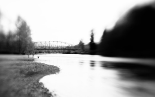 people blackandwhite dog blur nature water monochrome canon river landscape washington pacificnorthwest dreamy lensbabymuse canoneos5dmarkiii