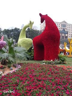 CIRCLEG 遊記 維多利亞公園 銅鑼灣 花展 2016 (31)