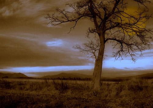 tree fall hungary pentax surreal bandigy
