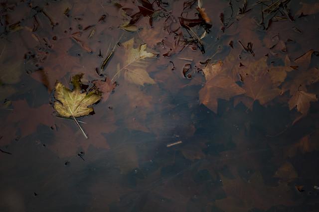 otoño5