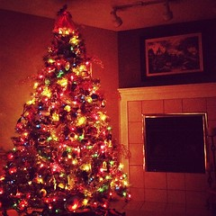 The tree is trimmed.