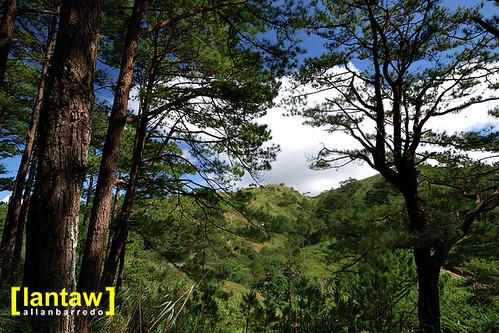 Salacsac Pine Forest 5