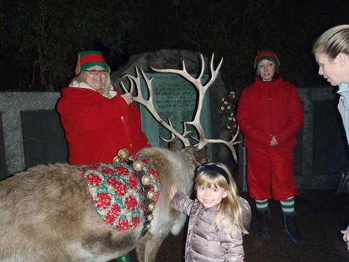 Petting reindeer
