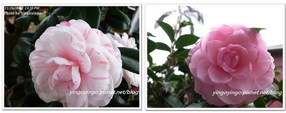 2011臺中國際花毯節20111126_R0044197