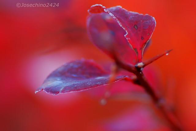 color y luz de una mañana de diciembre