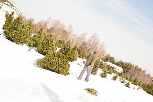 Christmas Tree4