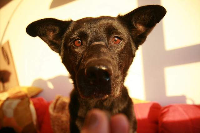 Dogwood Dog Training