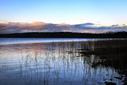 sunset water grass suomi finland weeds lakeside shore saimaa lakesaimaa