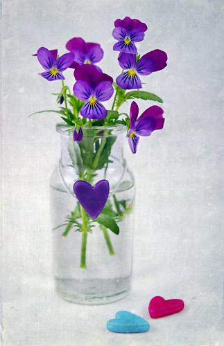 無料写真素材, 花・植物, パンジー, 花瓶, ハート