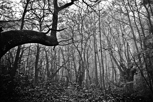 Sous les bois by maximfr