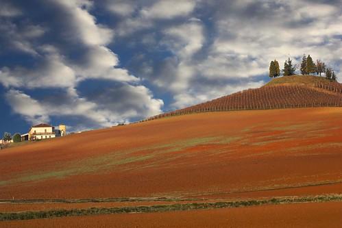 piemonte terre dicembre paesaggio colline vini alessandria barbera monferrato rosse 2011 malvasia moscato cuccaro