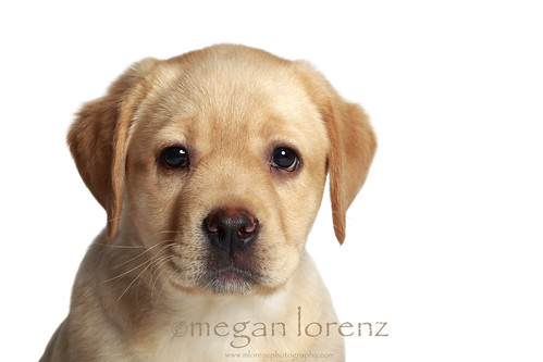 Marley by Megan Lorenz