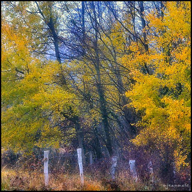 Dans la douceur de l'automne