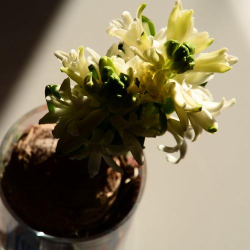 Le pouvoir des fleurs... by skoub