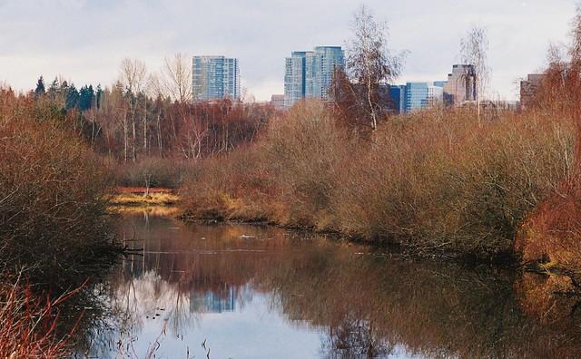 Bellevue Skyline from Mercer Slough