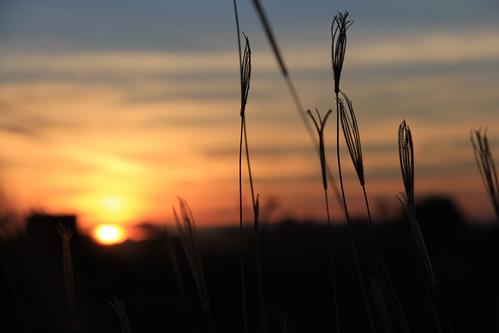 "sun sol mexico morninglight amanecer guanajuato gto sonne sonnenaufgang sunshower mexiko irapuato sonnenbad morningshower सूरज मेक्सिको सूर्योदय 瓜納華托,irapuato,日出,太陽,""陽光浴"",墨西哥, इराप्वाटो सूर्यस्नान グアナファト、イラプアト、日の出、太陽、日光浴、メキシコ、"