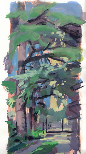 cedar of Lebanon by mauro lovadina